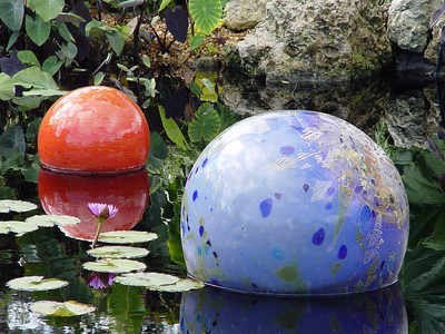 <b>Niijima Floats</b> in the Benjamin Rush Sibley Victoria Amazonica Pool  (February 11, 2006)